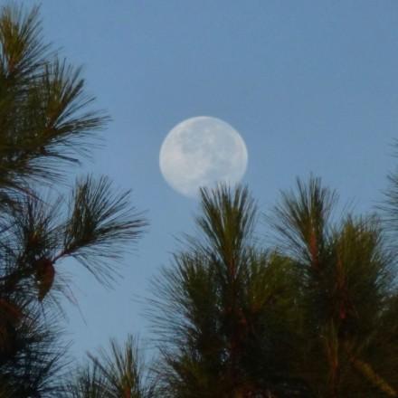 moon-daytime-Buddy_Puckhaper-Charleston-SC-9-21-2013-sq-e1461126035611